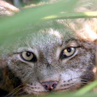 big_cat_rescue