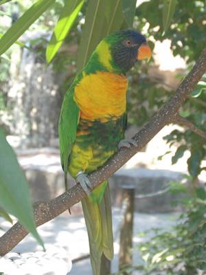 birdgarden2