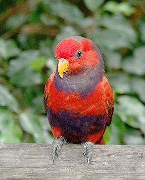 birdgarden3