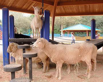 Animal Kingdom Animal Attractions Disney Secrets